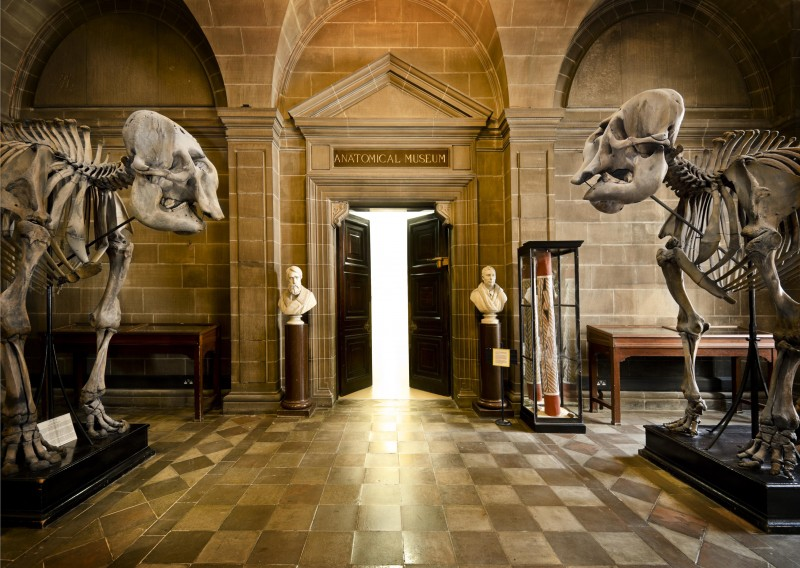 Anatomical Museum
